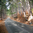 Road in the pine forest at the sunny day. — Stock Photo
