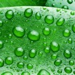 Water drops on a green leaf background. — Stock Photo