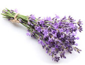 Bunch of lavender. — Stock Photo