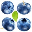 Постер, плакат: Four blueberries with leaf File contains clipping paths