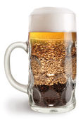 Beer mug with malt isolated on a white background. — Stock Photo
