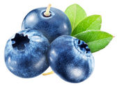 Blueberries with leaves. File contains clipping paths. — Stock Photo