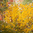 Autumn foliage — Stock Photo #3434649