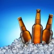 Stock Photo: Cool beer bottles.