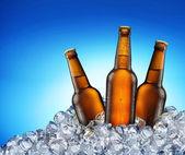 Cool beer bottles. — Stock Photo
