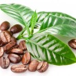 Roasted coffee beans and leaves. — 图库照片