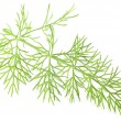 Green dill isolated on a white background. — Stock Photo #40066313