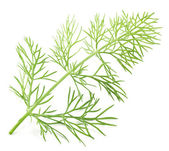 Green dill isolated on a white background. — Stock Photo