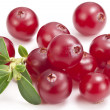 Cranberries with leaves. — Stock Photo #42520031