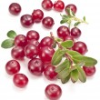 Cranberries with leaves. — Stock Photo