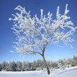 Frozen tree on winter. — Stock Photo #42520251