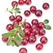 Cranberries with leaves. — Stock Photo #42522203