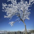 Frozen tree on winter. — Stock Photo #42522685