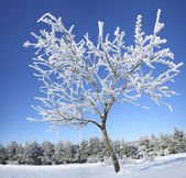 Frozen tree on winter. — Stock Photo