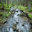 Spring stream in the Carpathians. — Stock Photo