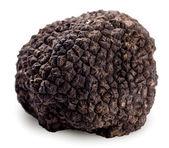 Black truffle on a white background. — Stock Photo