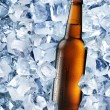 Bottle of beer in ice cubes. — Stock Photo