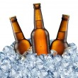 Three beer bottles getting cool in ice cubes. — Foto Stock