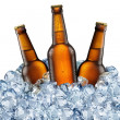 Three beer bottles getting cool in ice cubes. — 图库照片