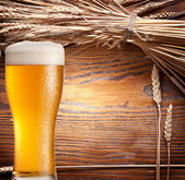 Ars of wheat & beer glass. — Stock Photo