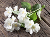 Jasmine flowers over old wooden table. — Stock Photo