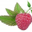 One rich raspberry fruit with leaves isolated on a white. — Stock Photo