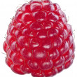 One rich raspberry fruit isolated on a white. — Stock Photo #51170341