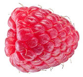 One rich raspberry fruit isolated on a white. — Stock Photo