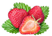 Strawberry fruits with leaves. File contains clipping paths. — Stock Photo