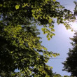 Sun reflection throw tree leaves — Stockvideo
