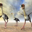 Terror Bird Phorusrhacos — Stock Photo