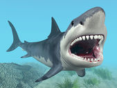 White Shark — Stock Photo