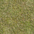 Grass Texture — Stock Photo #13685482