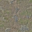 Grass Texture — Stock Photo #13825173
