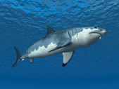 Great White Shark — Stock Photo