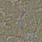 草のテクスチャ — ストック写真