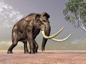 Mammut — Stockfoto