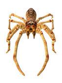 Camel spider — Zdjęcie stockowe