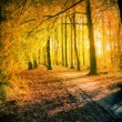 Sunset in autumn park — Stock Photo