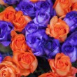 Blue and orange roses — Stock Photo