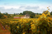 Wine landscape by autumn — Stock Photo