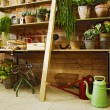 Stock Photo: Domestic plants