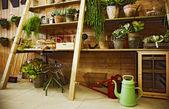 Domestic plants — Stock Photo