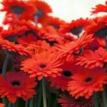 фон цветы — Стоковое фото