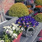 Home garden — Stock Photo #26026967