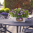 Home garden table — Stock Photo