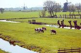 Dutch spring — Stock Photo