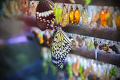 Life cycle of butterfly — Stock Photo
