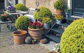 Flores en el jardín de casa — Foto de Stock