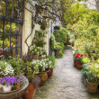 Stock Photo: Flower street in town